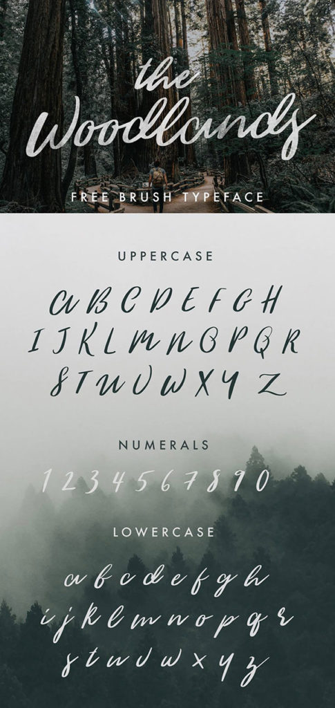 Free Calligraphy Fonts